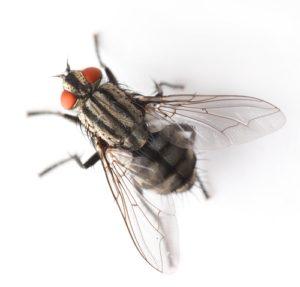 air curtains prevent flies